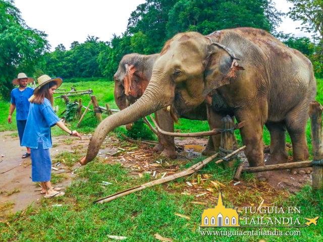 Santuario de elefantes en Chiang Mai Tailandia